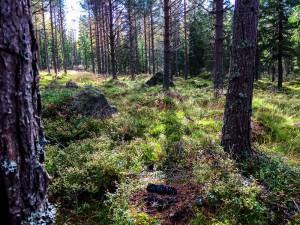 Foto fra Elgjagt i Värmland, Schultz & Larsen Rifler
